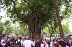 Documentário Verdejando - Ricardo Cardim