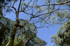 Árvores cimentadas - Ricardo Cardim