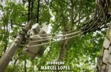 Árvores e fiação aérea - Ricardo Cardim