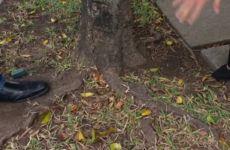 Crueldades com as árvores - Ricardo Cardim