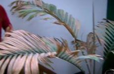 Plantas dentro de casa - Ricardo Cardim