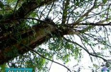 Podas de árvores - Ricardo Cardim