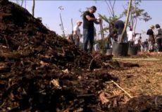 Mutirão Plantio Floresta de Bolso Parque Villa Lobos - Ricardo Cardim