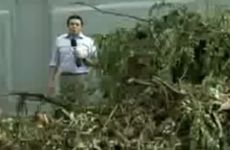 Queda de árvores - Ricardo Cardim