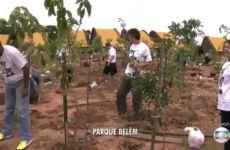 Floresta de Bolso - Ricardo Cardim