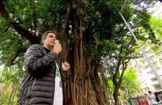 Passeio pelas árvores do centro de São Paulo - Ricardo Cardim