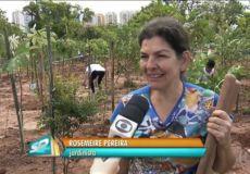 Mutirão Floresta de Bolso Belém - Ricardo Cardim