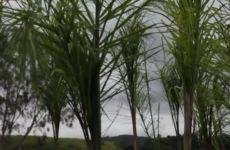 Seed Gamaro - Paisagismo Sustentável