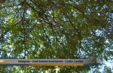 Árvores Veteranas com Ricardo Cardim