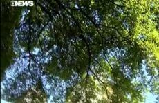 Árvores Veteranas de Guerra