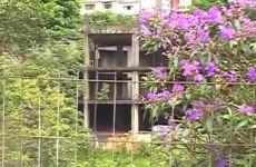 A Flora reconquista seu espaço em São Paulo
