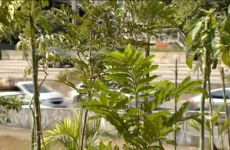 Floresta de Bolso da empresa TATA