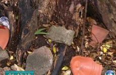 Sete erros contra a preservação de árvores