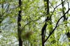 Fantástico - florestas brasileiras x alemãs