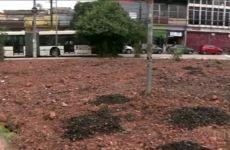 Floresta de Bolso de Pinheiros - SPTV Globo - Ricardo Cardim